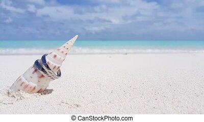 v00214 Maldives beautiful beach background white sandy...