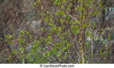 va, nord, sur, neige, arbres, coups balai, vert, avril, ...