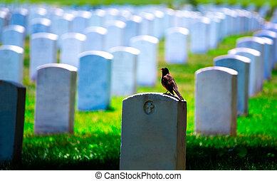 va, washington, nemzeti temető, egyenáram, arlington