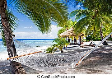 vacío, hamaca, entre, árboles de palma, en, un, playa
