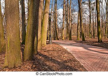 vacío, otoño, parque, con, senderos, para, peatones
