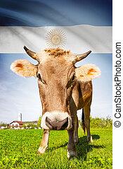 vaca, con, bandera, fondo, serie, -, argentina