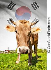 vaca, con, bandera, fondo, serie, -, corea del sur