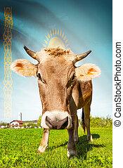 vaca, con, bandera, fondo, serie, -, kazakhstan