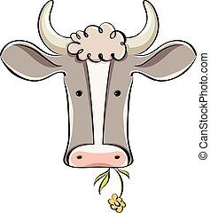 vaca, head.