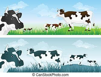 vaca, ligado, prado