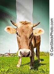 vaca, serie,  -, bandera, Plano de fondo,  nigeria