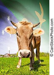 vaca, serie, -, bandera, plano de fondo, isla, navidad