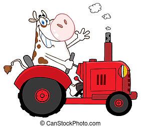 vaca, trator, agricultor, feliz, vermelho