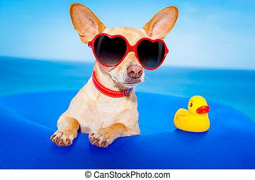vacaciones del verano, perro