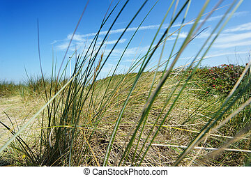 vacance, herbe, ciel, par, marram