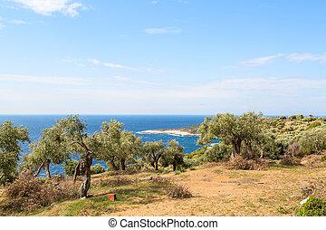 vacances été, fond, à, ile grecque, thasos, olive, arbres, et, mer, grèce
