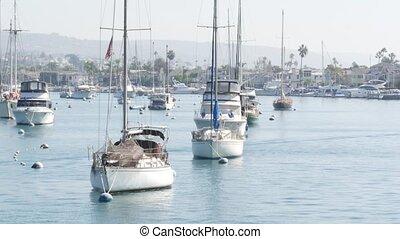 vacances, pacifique, port, banlieue, front mer, week-end, californie, marina, yachts, newport, côte, propriété, luxe, destination, usa., county., vrai, recours, beachfront, plage, voiliers, coûteux, orange