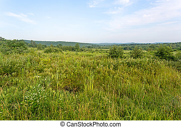 Vacant land in New England - A large area of vacant land in...