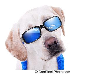 vacanza estate, cane