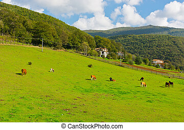 vacas, caballos