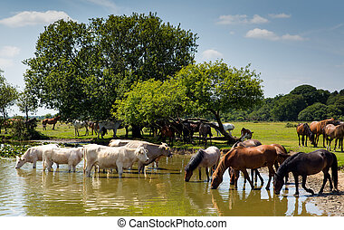 vacas, e, pôneis, em, lago