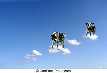 vacas, en, nubes