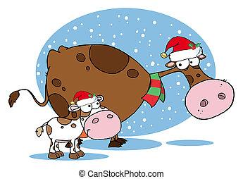 vacas, navidad