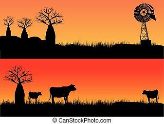 vacas, ocaso, tres