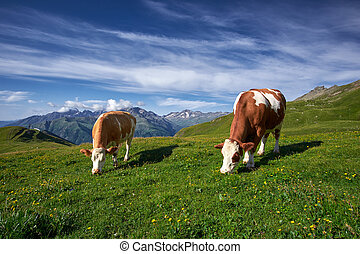 vacas, pastar, ligado, um, prado