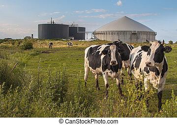 vacas, planta, biogas