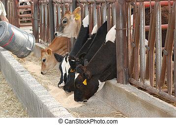 vacas, ser, grained