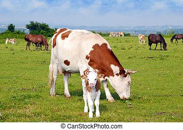 vacas, vaquita, y, caballos, en, pasto
