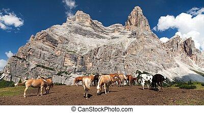 vacas, y, caballos, debajo, monte, pelmo, en, italiano, dolomities