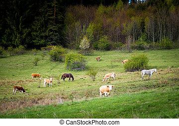 vacas, y, caballos, en, pasto