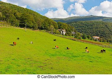 vacas, y, caballos