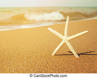 Vacation concept - Star fish on tropical sandy beach