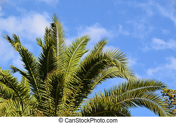 vacation destination photo, inviting green palm tree leaves on blue sky