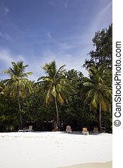 Vacation island - Beautiful white sandy beach and palm trees...