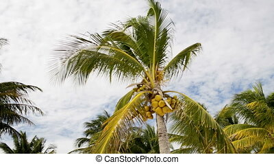 palm tree over blue sky with white clouds - vacation, nature...