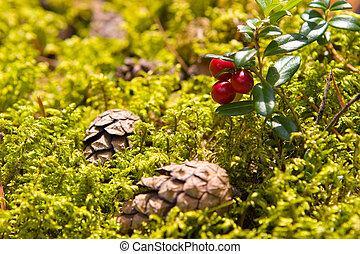 (vaccinium, lingonberry, vitis-idaea)