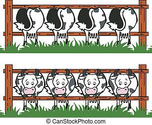 vache, grange