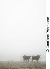 vaches, brouillard