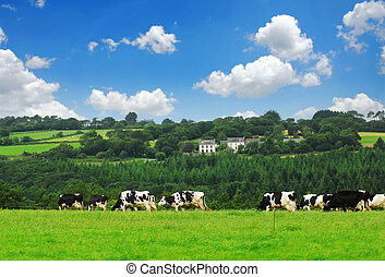vaches, dans, a, pâturage
