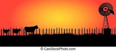 vaches, moulin, intérieur, trois, vent