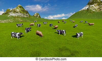 vaches, pâturage, vue, aérien, alpin