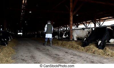 vaches, poignarder, affamé, paysan