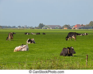 vaches, reposer, paysage, agricole