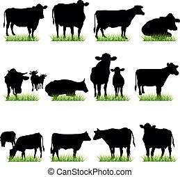vaches, silhouettes, ensemble