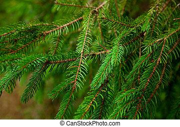 vacht, foto, boompje, anderen, groene achtergrond, takken