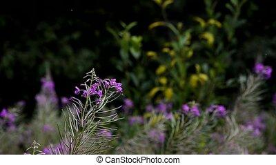 vaciller, fleurs, doux, été, brise, pré, forest., herbe