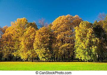 vacker, äng, i parken