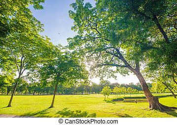 vacker, äng, och, träd, i parken