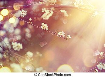 vacker, beskaffenhet scen, med, blomning, träd, och, sol blossa