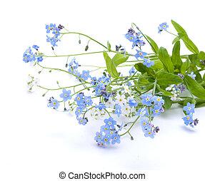 vacker, blå blommar